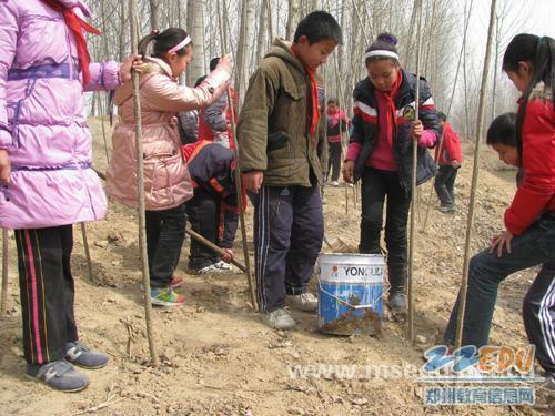 [石家]让护绿永驻心间惠济小学庄沿西图片