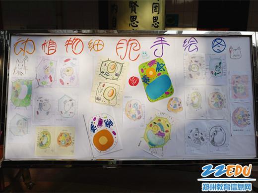 郑州市第74中学举行生物学科节暨模型展示活动