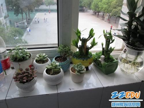"""郑州24中开展班级植物角评比活动 打造""""生态教室"""""""