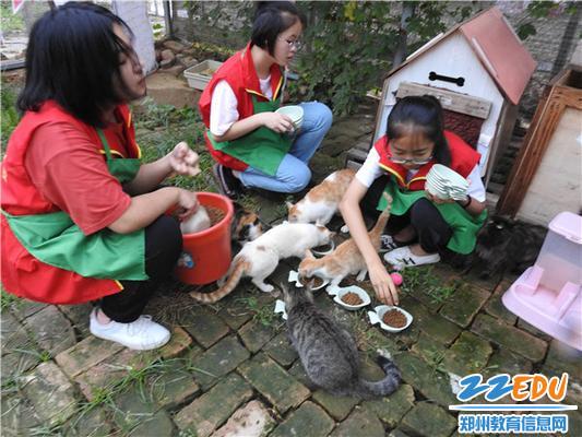 关爱流浪猫 (1)