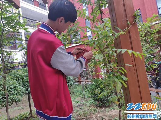 学生给植物挂牌