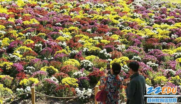 陪着父母去赏菊