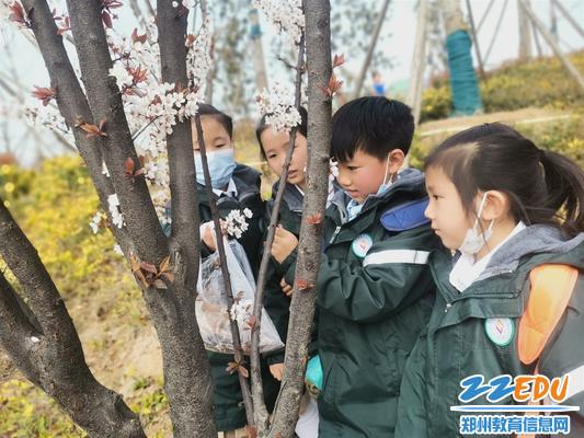 郑东新区龙华小学的学生观察花的结构