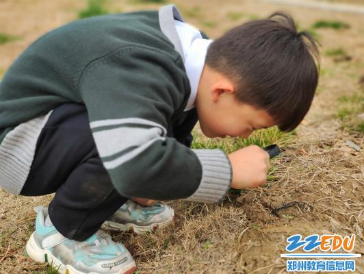 郑东新区龙华小学学生用放大镜观察植物的变化