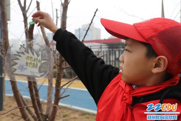 郑东新区中州大道学生精心制作标签,悬挂在校园植物上,以便让更多的人们认识植物、保护植物。