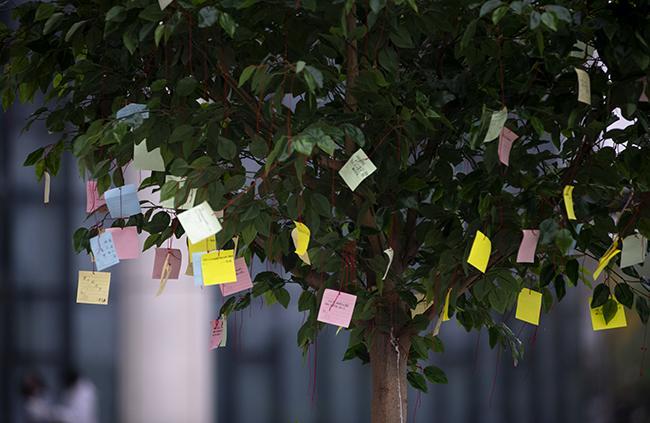 """学生把自己梦想挂在""""梦想树""""上"""